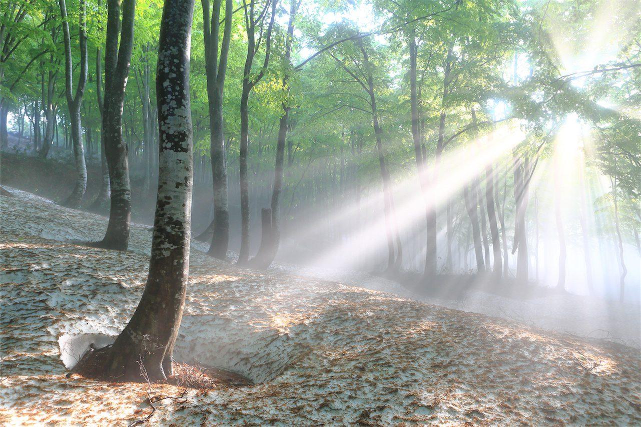 癒やされることだけでなく、木漏れ日や朝日の差し込む光景は、パワーをも与えてくれます。