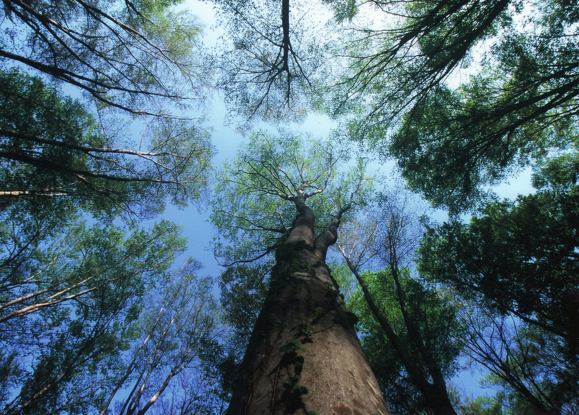 都会の生活で疲れた心と体に・・・ 森林浴でマイナスイオンをたっぷりと浴び、心身ともに癒されましょう。上を見上げればそこには青空、気分も晴れ渡るでしょう