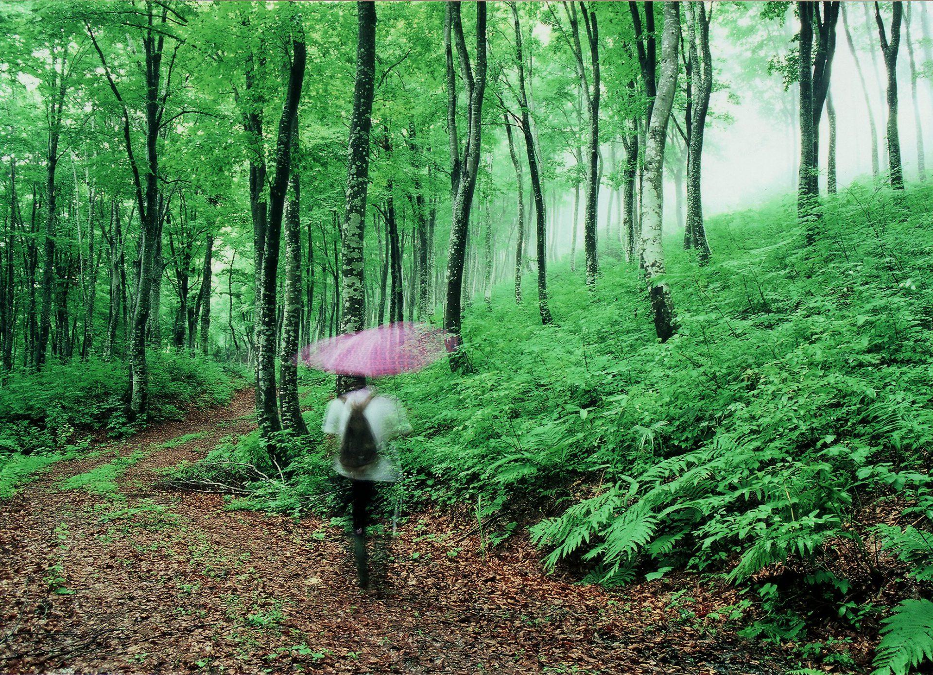 疲れた身体も心も癒やされる、神秘的な空間。この空気感を体感すれば説明の言葉はいりません。
